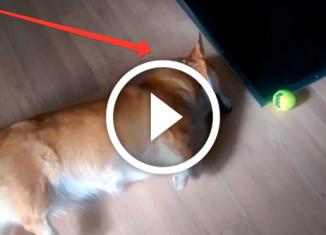 самая ленивая собака