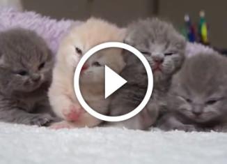 самые милые котята в мире