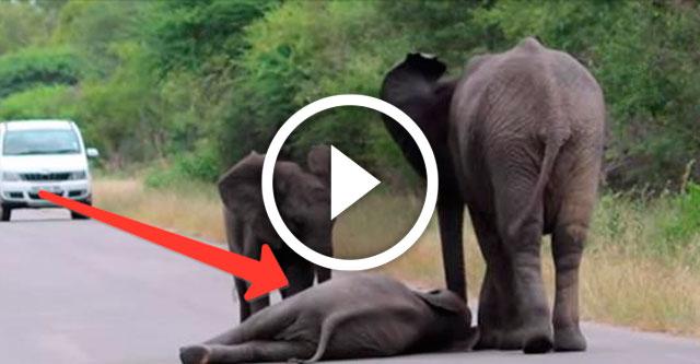 слоненок упал