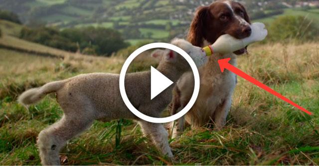 собака кормит ягненка