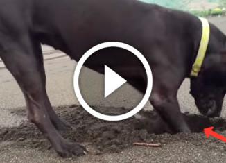 собака откопала краба