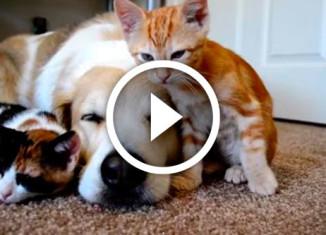 животные которые будят друг друга