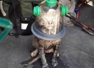 пожарные спасли кошку