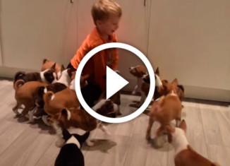 16 неугомонных щенков в одном доме