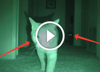 что коты делают ночью