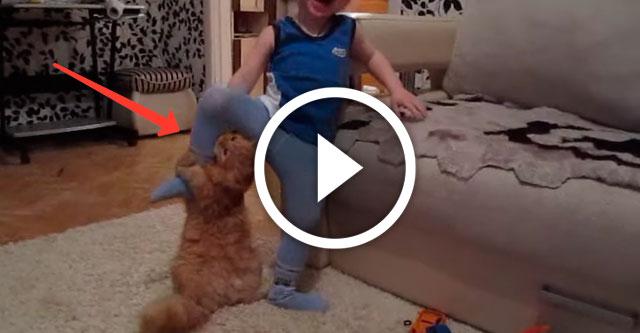 дружба рыжего кота с мальчиком