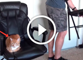 как работать дома вместе с котами