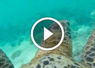 камера на панцире черепахи