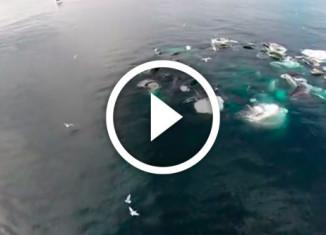 киты на Аляске