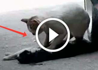 кошка спасает кота