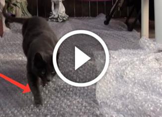 кошки и пузырчатая пленка