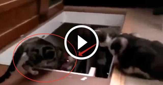 кот сбросил кота в подвал