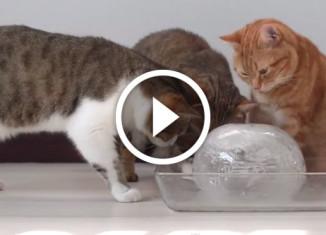 коты и ледяной шар