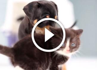 котята впервые увидели щенят