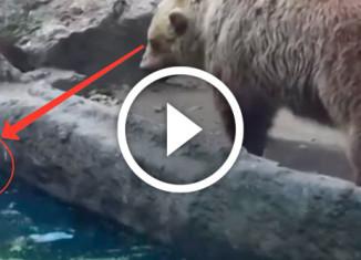медведь спас ворону