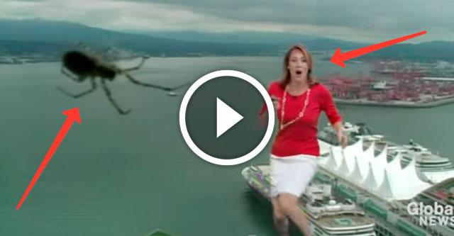 паук на телевидении