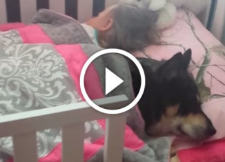 собака спит возле девочки
