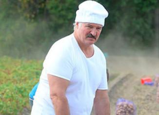 Лукошенко собирает картошку