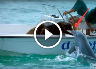 дельфин поцеловал собаку
