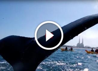 игривый кит