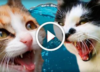 кошки против воды