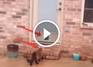 кот и его новая кошачья дверца