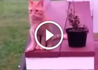 кот сидит как человек