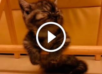 котенок борется со сном