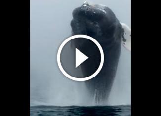 огромный кит застал пассажиров врасплох