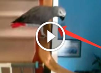 попугай катается по перилам