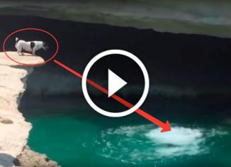 прыжок собаки в воду