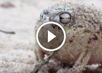 самая милая лягушка в мире