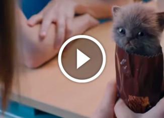 самая милая реклама печенья