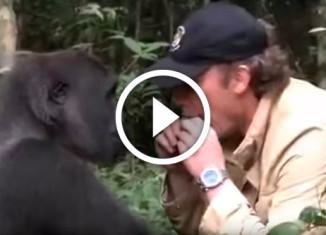встреча мужчины с гориллой