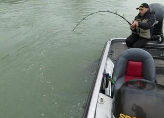 Рыбак поймал гигантскую рыбу