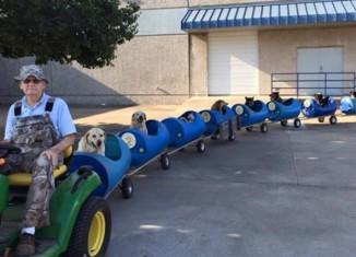 Поезд для спасенных собак