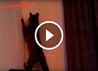 Кошки vs. лазеры