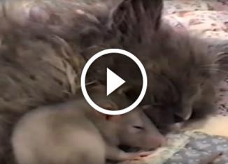мышь и котенок