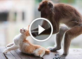 обезьянка и кошка