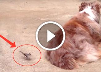 Птичка и собака