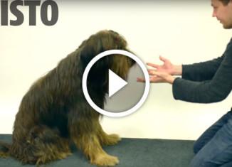 реакция собак на фокусы