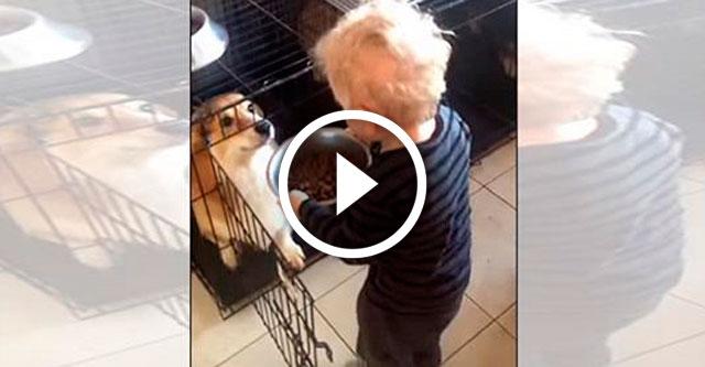 Ребенок кормит собак