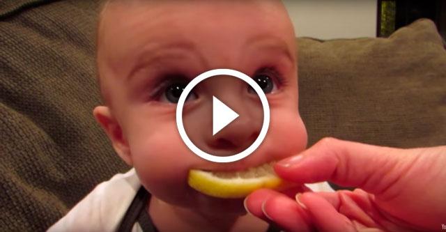 ребенок пробует лимон