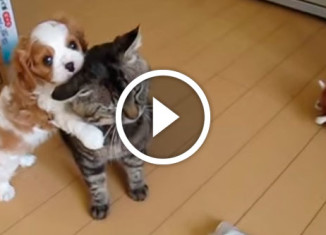 щенок грызет кошачье ухо