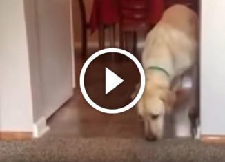 собака боится ковра