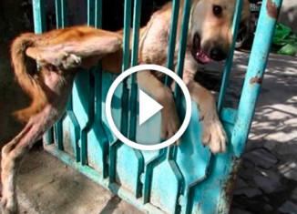 Собака застряла в воротах