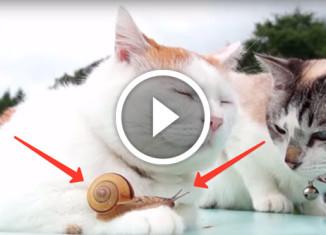Коты и улитка