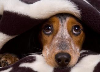 Сверхспособности собак