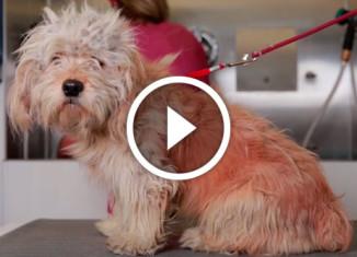 Стрижка спасла собаку