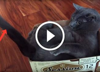 Кот играет с хвостом